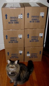 Max the cat taking credit for the packing.